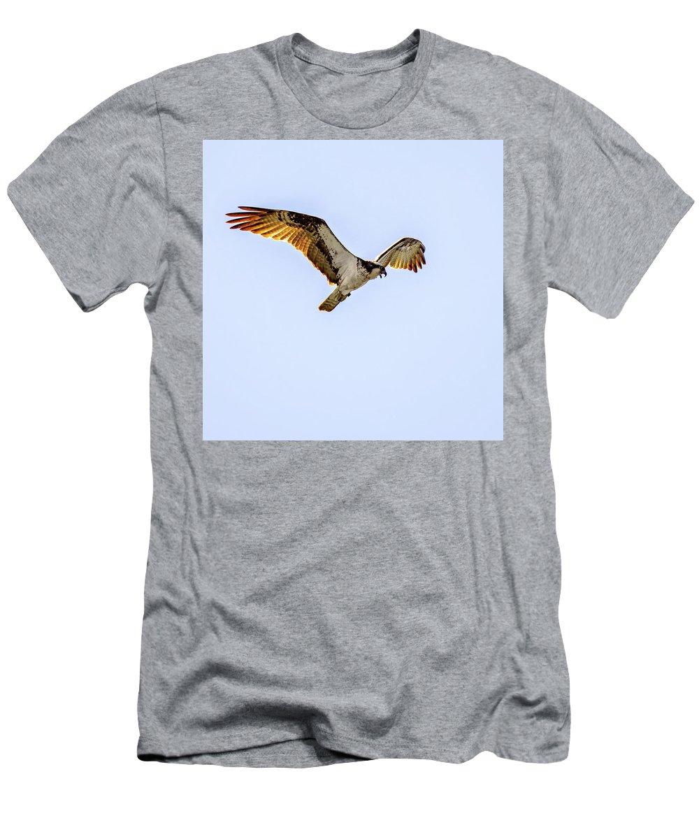 Steve Harrington Men's T-Shirt (Athletic Fit) featuring the photograph Osprey 2 by Steve Harrington