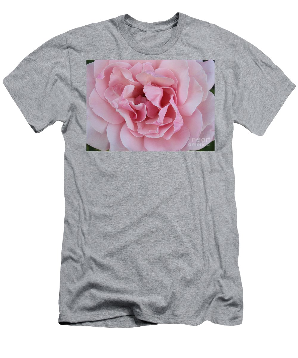 Pink Roses Men's T-Shirt (Athletic Fit) featuring the photograph Pink Rose Closeup by Carol Groenen