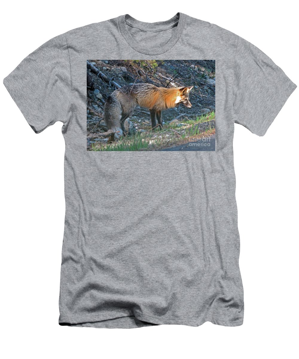 Red Fox Men's T-Shirt (Athletic Fit) featuring the photograph Red Fox by Cindy Murphy - NightVisions