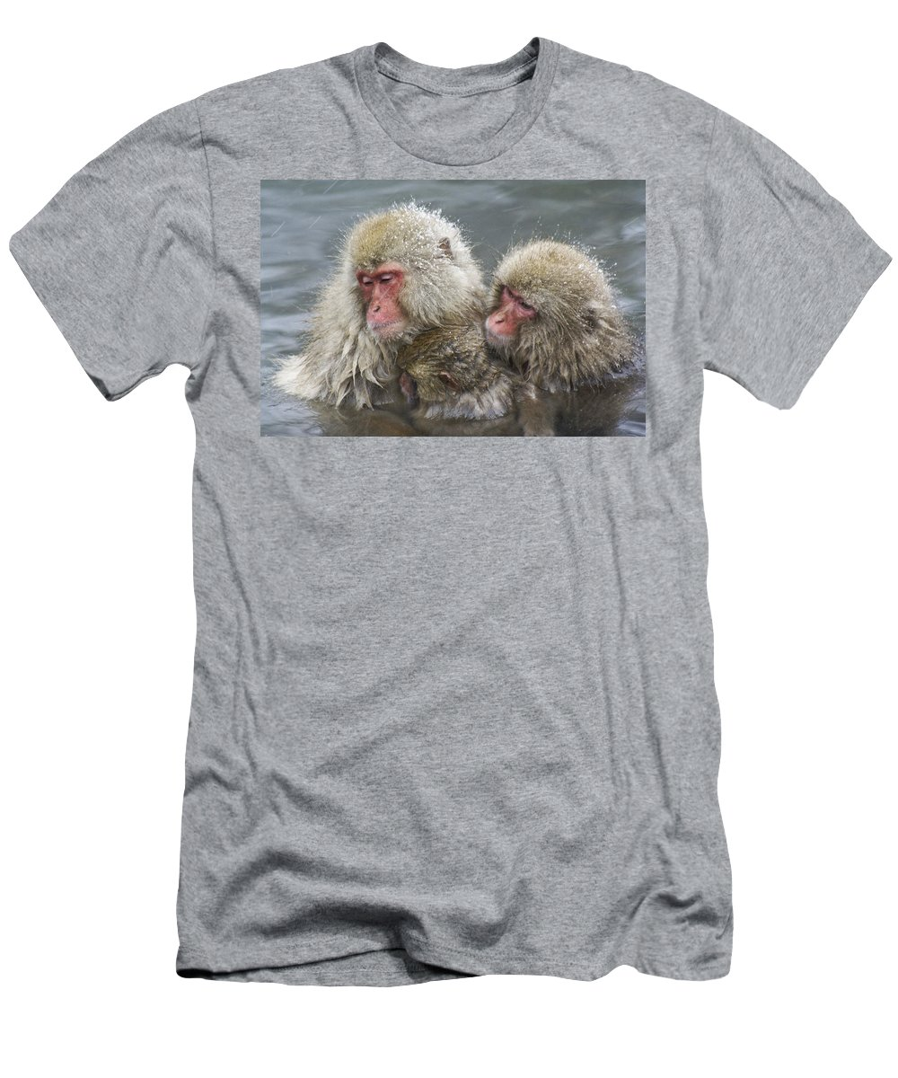 Snow Monkey Men's T-Shirt (Athletic Fit) featuring the photograph Snuggling Snow Monkeys by Michele Burgess