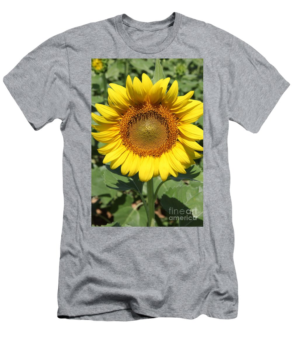 Sunflowers Men's T-Shirt (Athletic Fit) featuring the photograph Sunflower 09 by Amanda Barcon