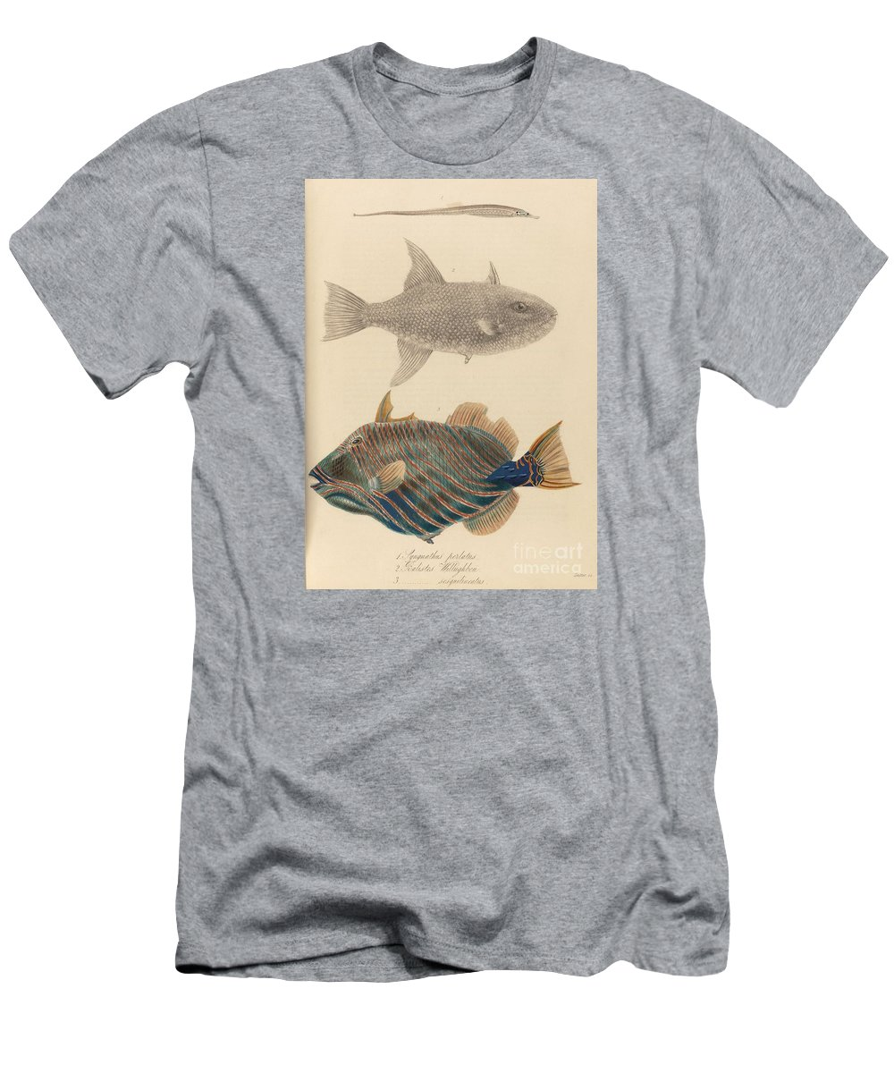 The Zoology Of Captain Beechey's Voyage 1825 - Syngnathus Perlatus + Balistes Willughbeu + Sesquilineatus. Three Fish Men's T-Shirt (Athletic Fit) featuring the painting The Zoology Of Captain by MotionAge Designs