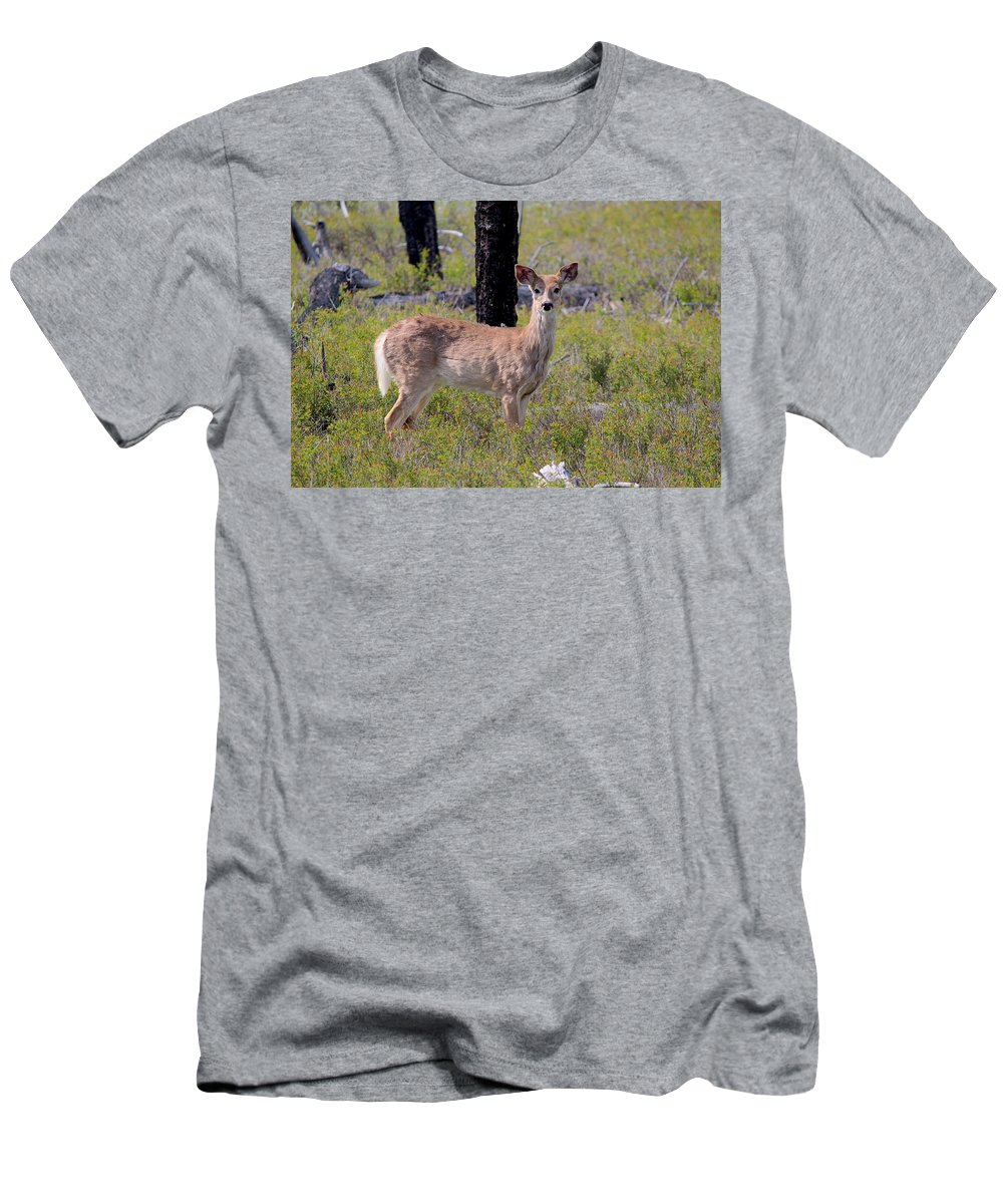 Travel Men's T-Shirt (Athletic Fit) featuring the photograph White-tailed Deer by Nicholas Miller