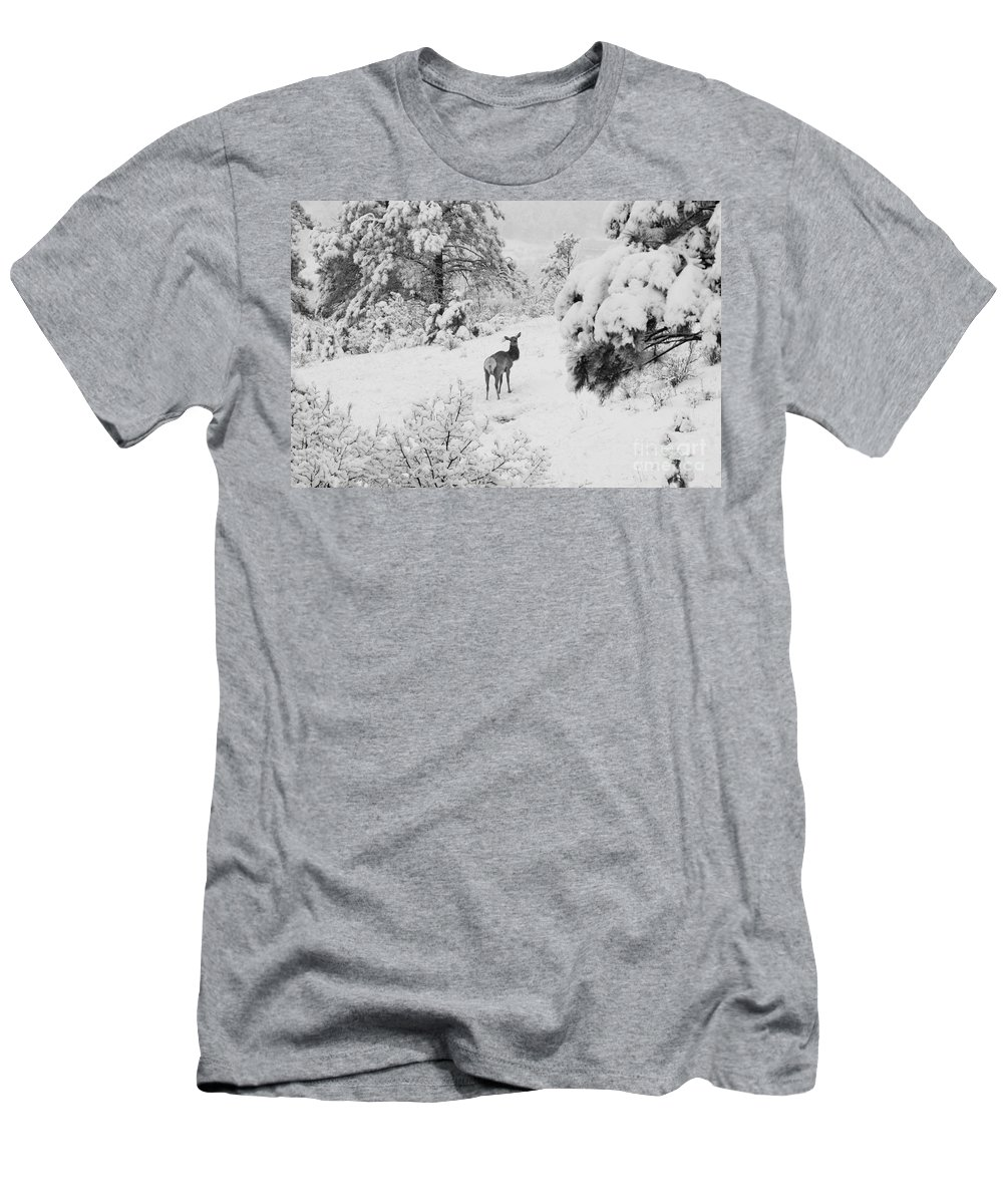 Elk Men's T-Shirt (Athletic Fit) featuring the photograph Elk In Deep Snow In The Pike National Forest by Steve Krull