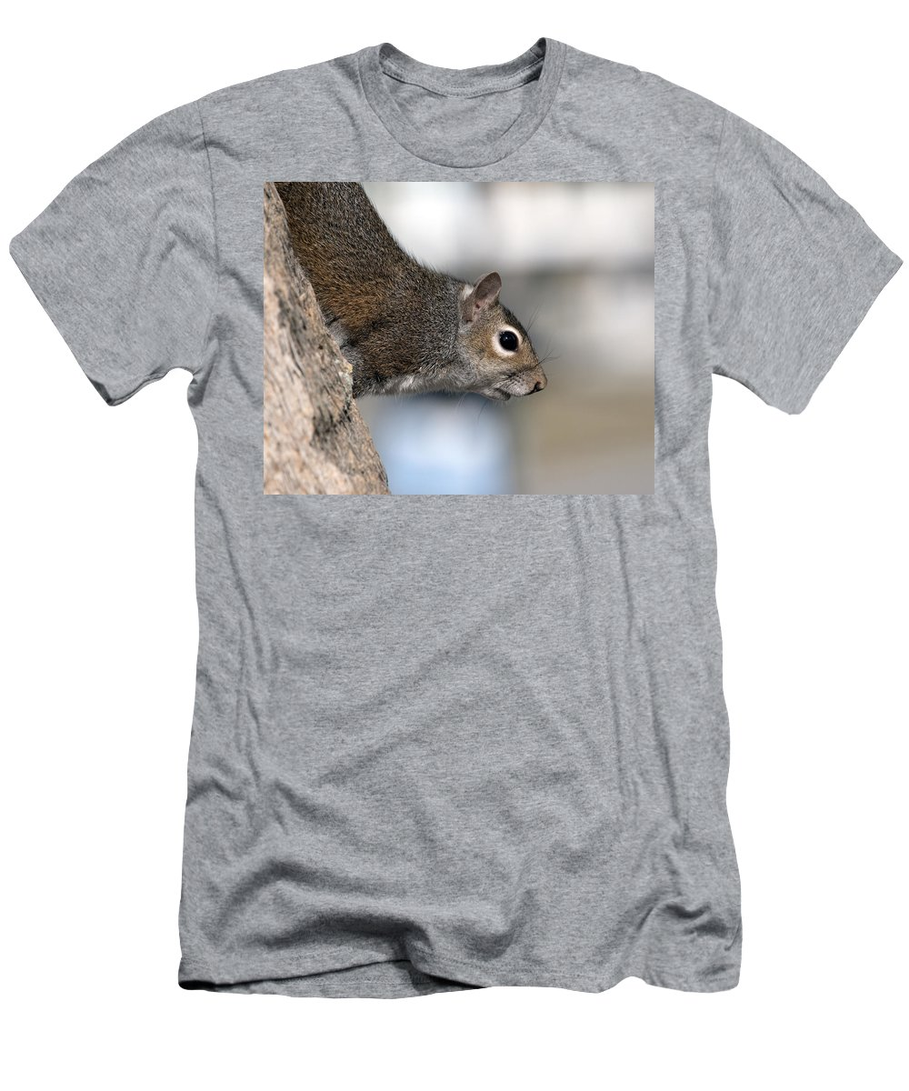 Squirrel Men's T-Shirt (Athletic Fit) featuring the photograph Eastern Gray Squirrel by Allan Hughes