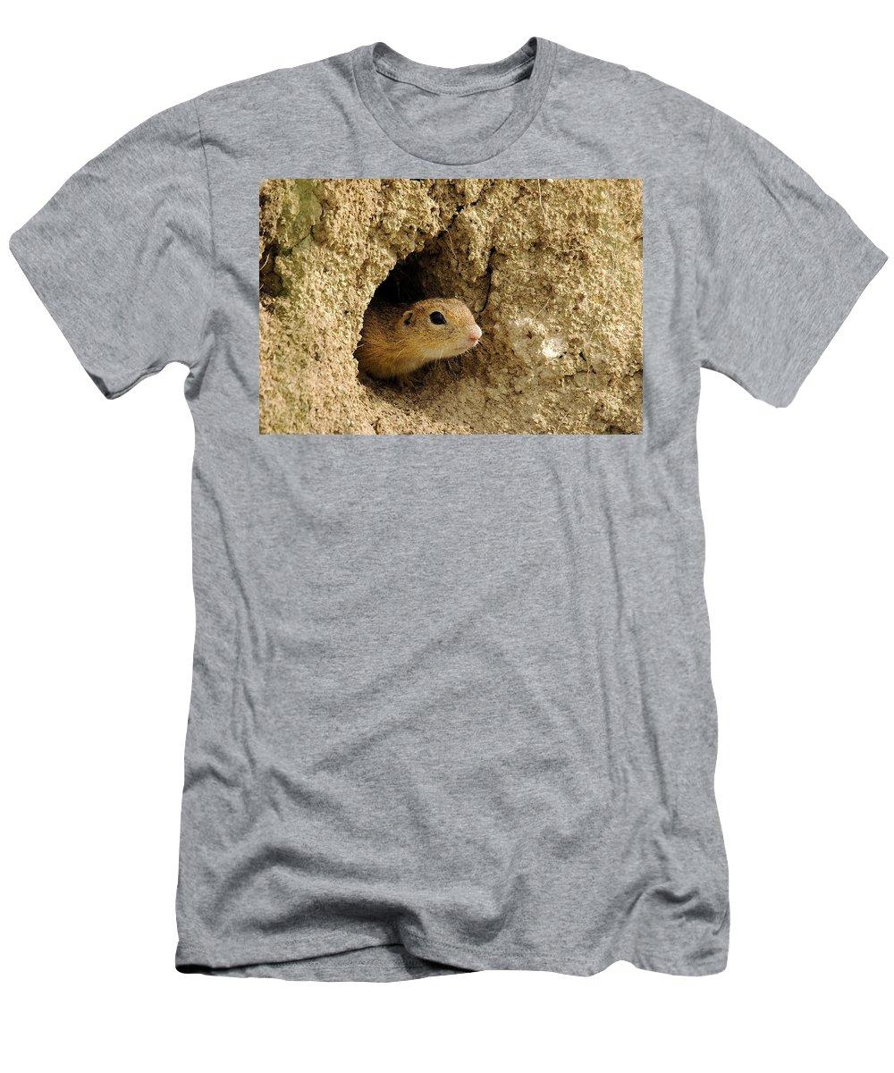 European Ground Squirrel Men's T-Shirt (Athletic Fit) featuring the photograph Goround Squirrel by Cliff Norton