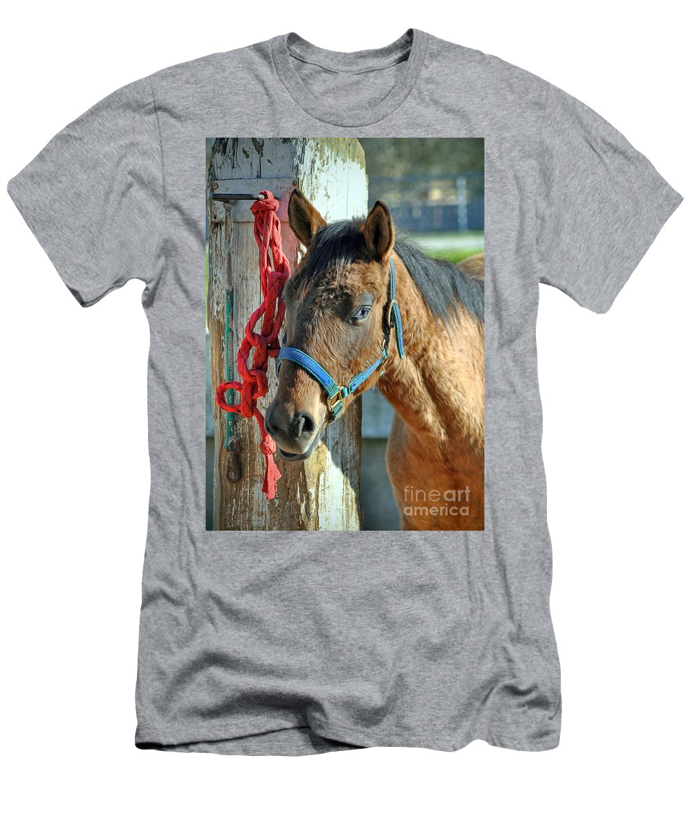 Animal Men's T-Shirt (Athletic Fit) featuring the photograph Horse by Savannah Gibbs
