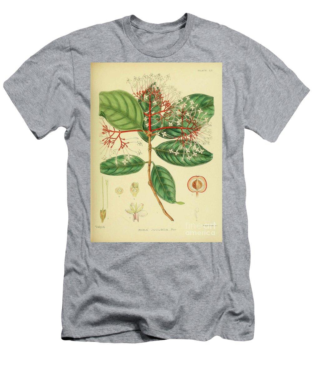 Botanical Men's T-Shirt (Athletic Fit) featuring the digital art Vintage Botanical Illustration by Alexandr Testudo