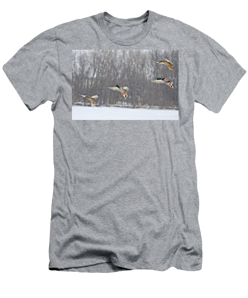 Ducks Men's T-Shirt (Athletic Fit) featuring the photograph 4 In A Row by Robert Pearson