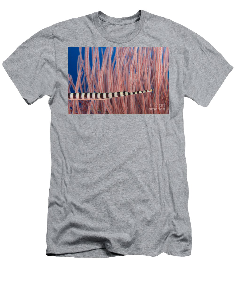 Animal Art Men's T-Shirt (Athletic Fit) featuring the photograph Malaysia, Marine Life by Dave Fleetham - Printscapes