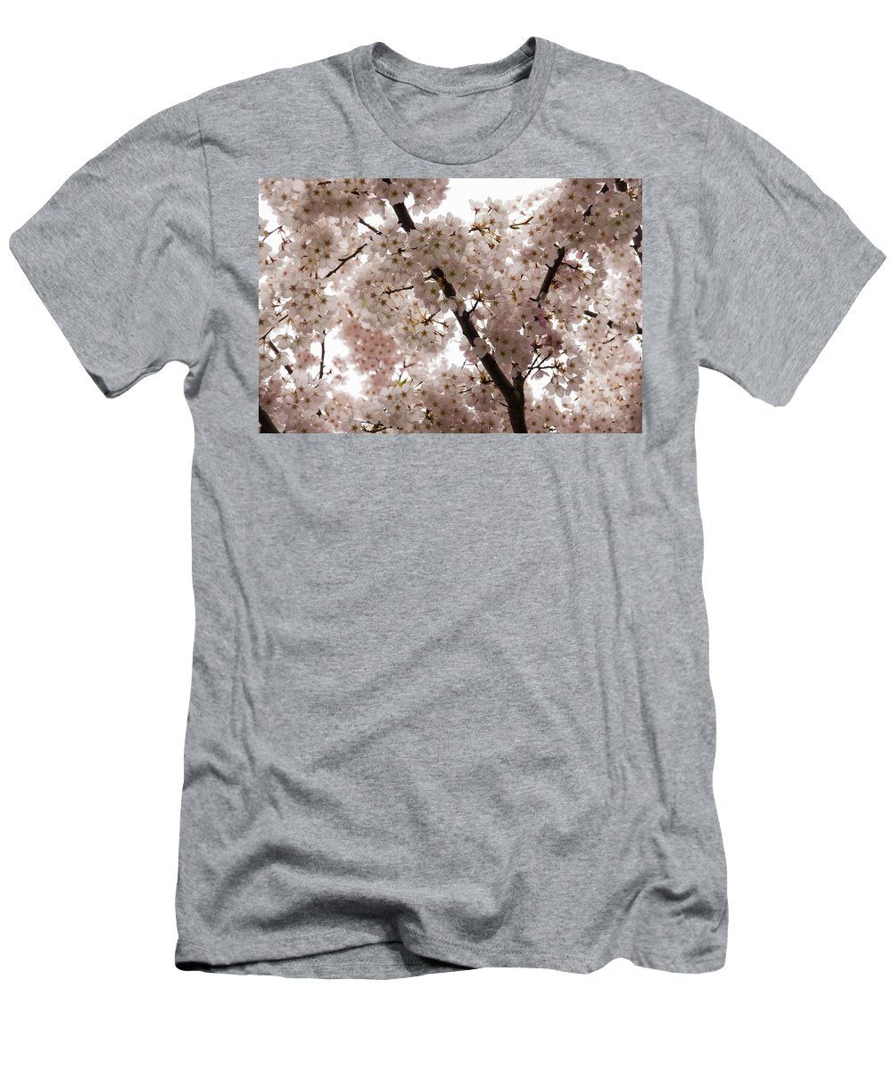 Georgia Mizuleva Men's T-Shirt (Athletic Fit) featuring the photograph A Cloud Of Pastel Pink Cherry Blossoms Celebrating The Arrival Of Spring by Georgia Mizuleva
