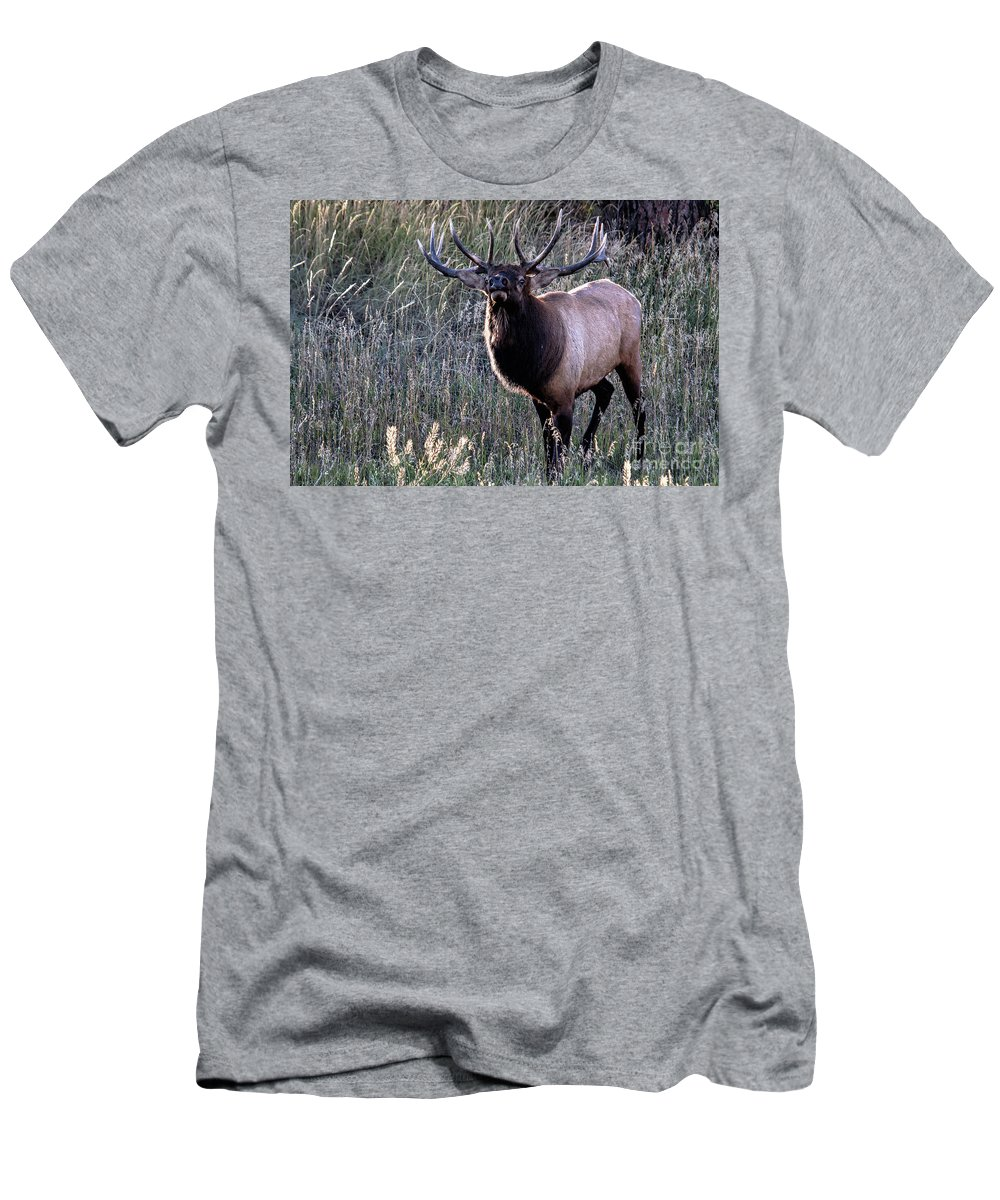 Elk Men's T-Shirt (Athletic Fit) featuring the photograph A Surly Attitude by Jim Garrison