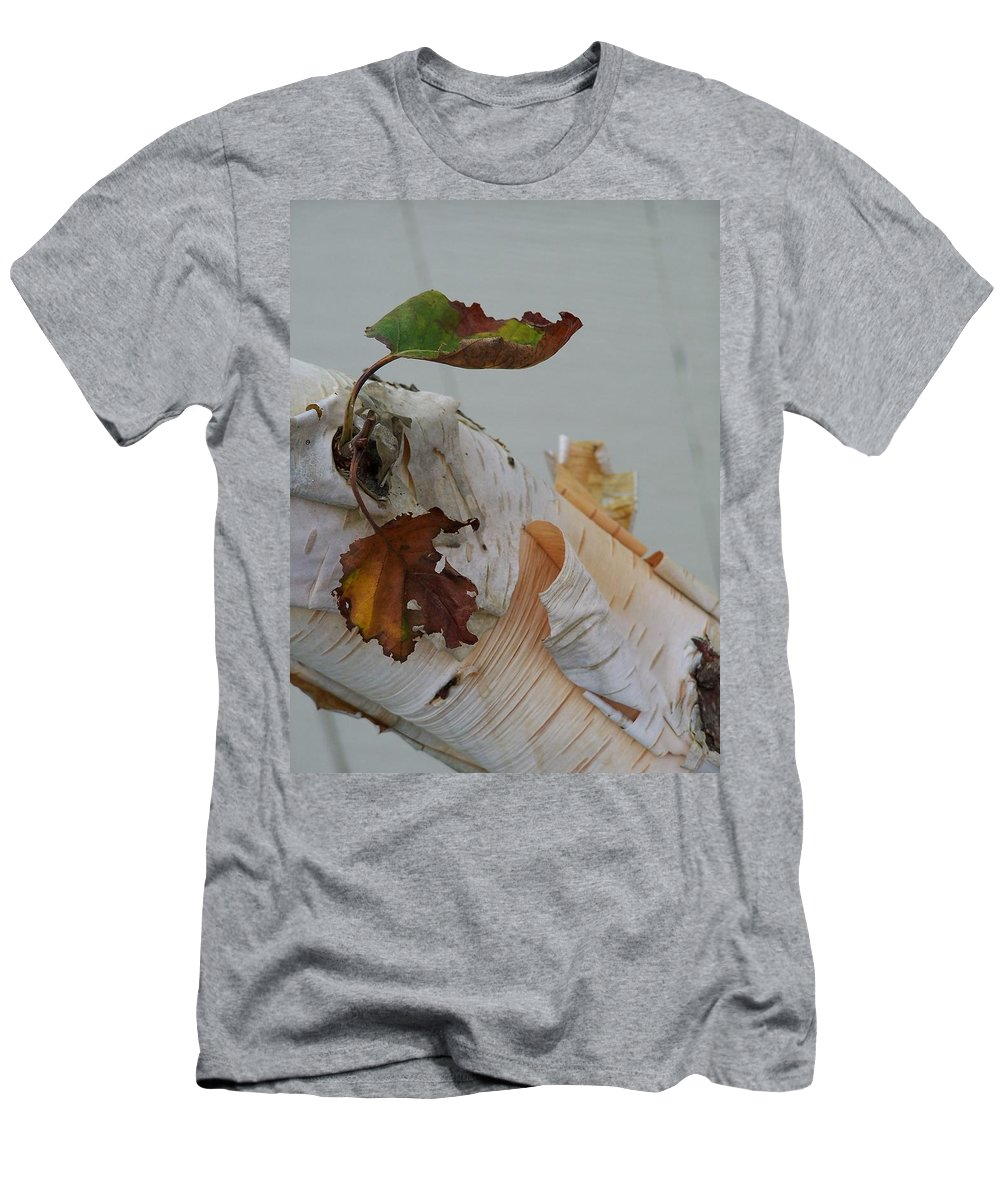 Birch Men's T-Shirt (Athletic Fit) featuring the photograph A Touch Of Fall by Gale Cochran-Smith