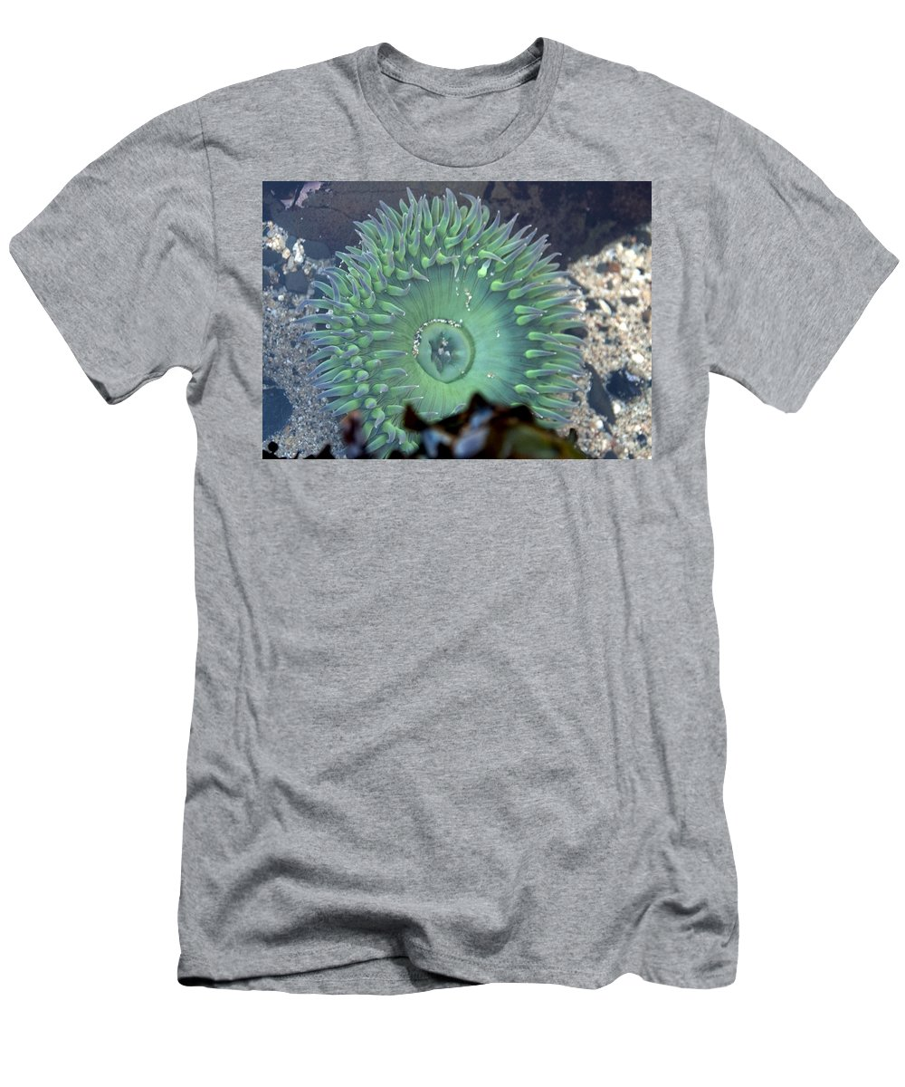 Anemone Men's T-Shirt (Athletic Fit) featuring the photograph Anemone by Steven Natanson