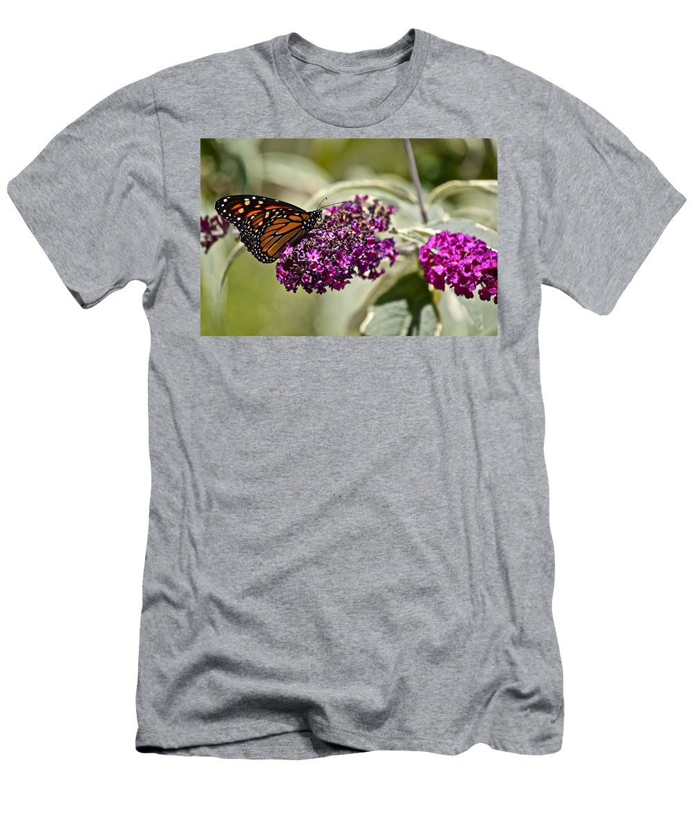 Butterfly Men's T-Shirt (Athletic Fit) featuring the photograph Attraction by Diana Hatcher