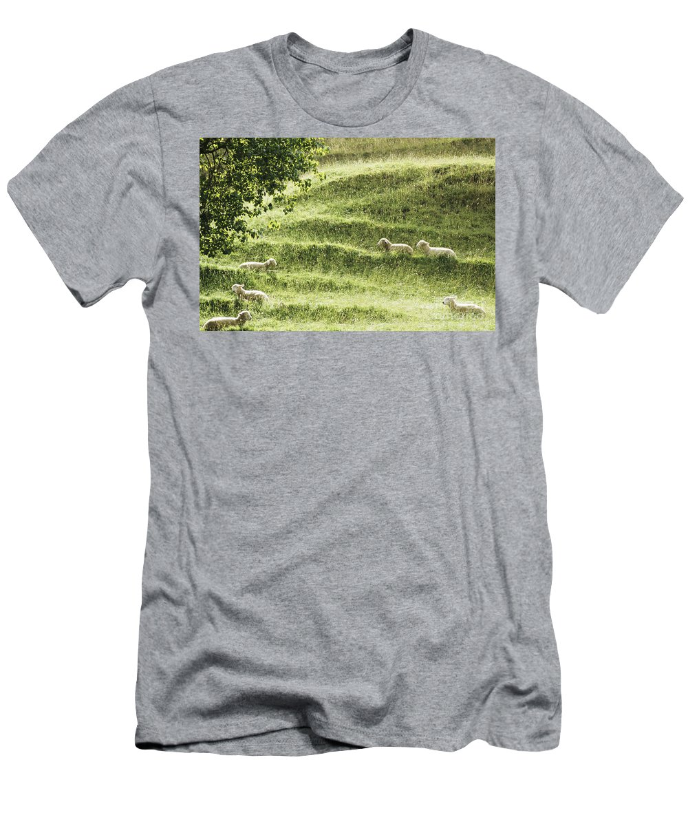 Animal Art Men's T-Shirt (Athletic Fit) featuring the photograph Auckland Sheep Grazing by Larry Dale Gordon - Printscapes