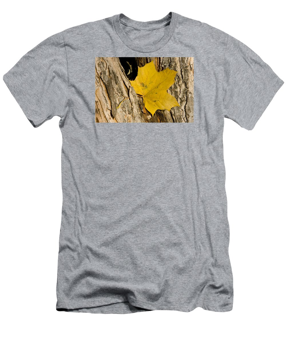 Maple Men's T-Shirt (Athletic Fit) featuring the photograph Autumn Leaf by James BO Insogna