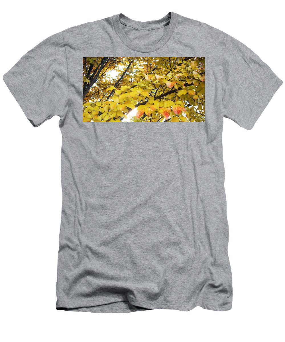Fall Pictures Men's T-Shirt (Athletic Fit) featuring the photograph Autumns Gold by Karin Dawn Kelshall- Best