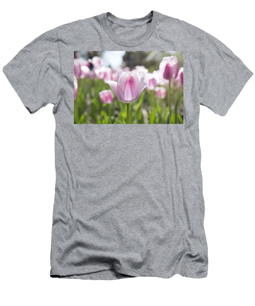 Tulips Men's T-Shirt (Athletic Fit) featuring the photograph Awakening by Jennifer Schaefer