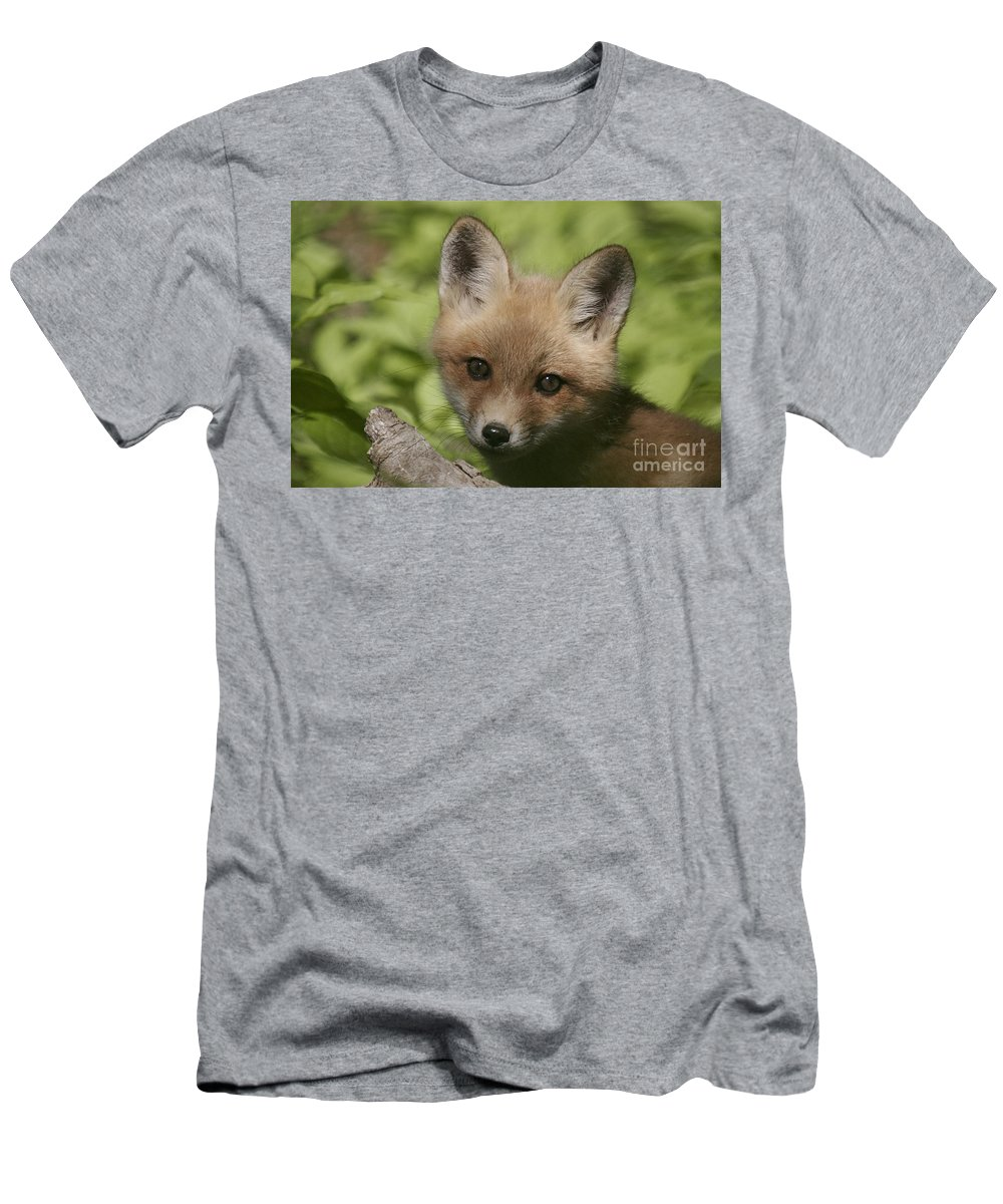 Red Fox Men's T-Shirt (Athletic Fit) featuring the photograph Baby Red Fox by Robert Pearson