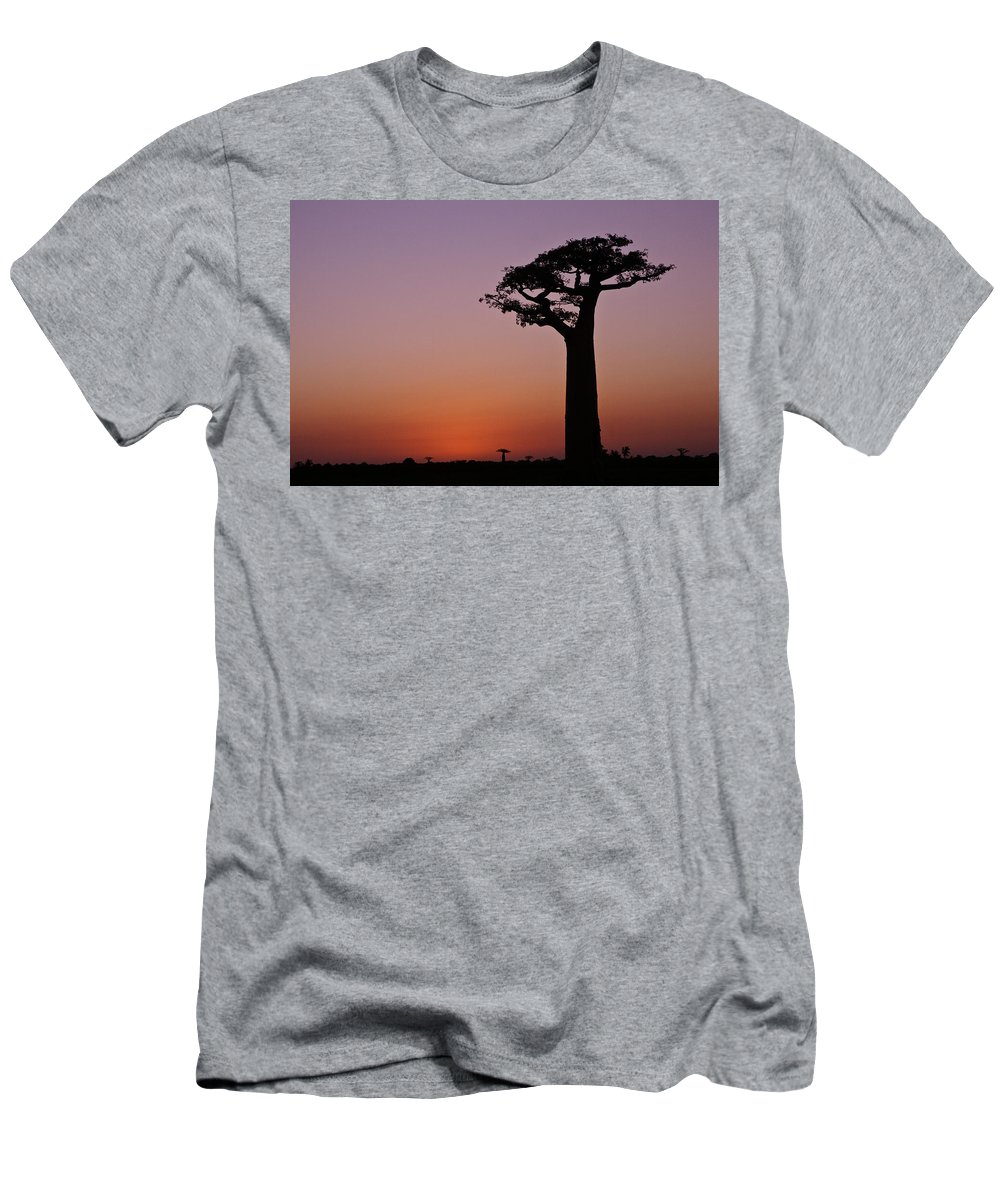Madagascar Men's T-Shirt (Athletic Fit) featuring the photograph Baobab At Sunset by Michele Burgess