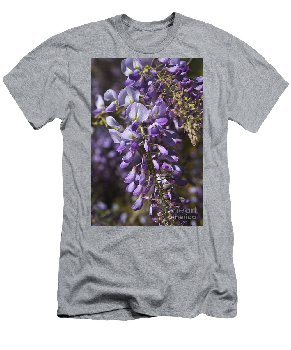 Wisteria Men's T-Shirt (Athletic Fit) featuring the photograph Beautiful Wisteria A Spring Delight by Joy Watson