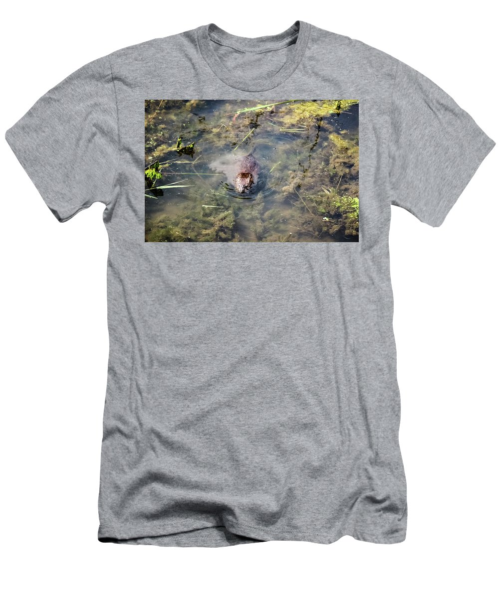 Beaver Spotted The Great Beaver Escape 01 Men's T-Shirt (Athletic Fit) featuring the photograph Beaver Spotted The Great Beaver Escape 01 by Cynthia Woods