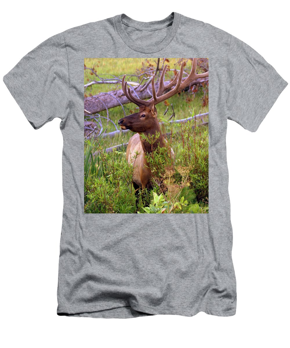 Bull Elk Men's T-Shirt (Athletic Fit) featuring the photograph Big Bull by Marty Koch