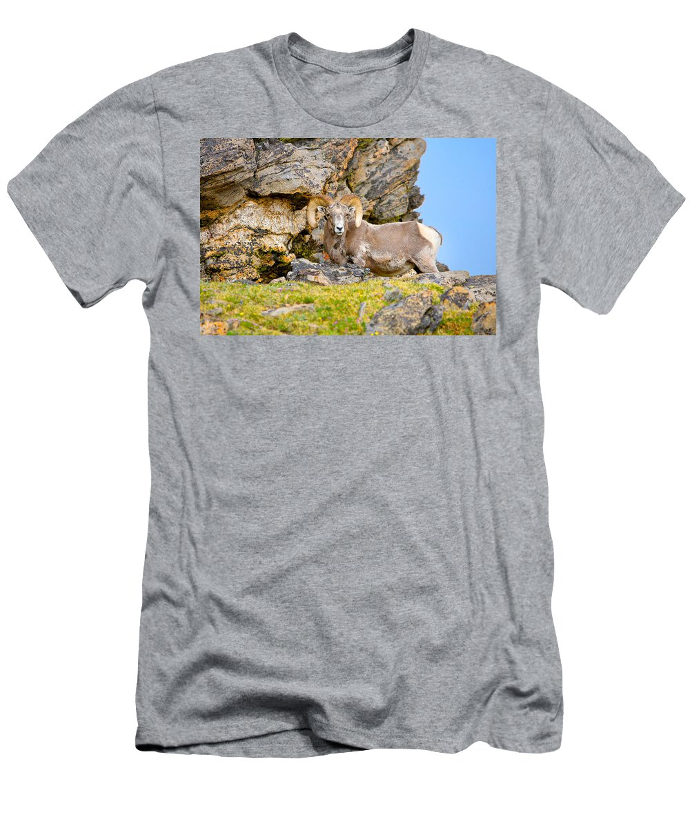 Ram Men's T-Shirt (Athletic Fit) featuring the photograph Bighorn Sheep by James O Thompson