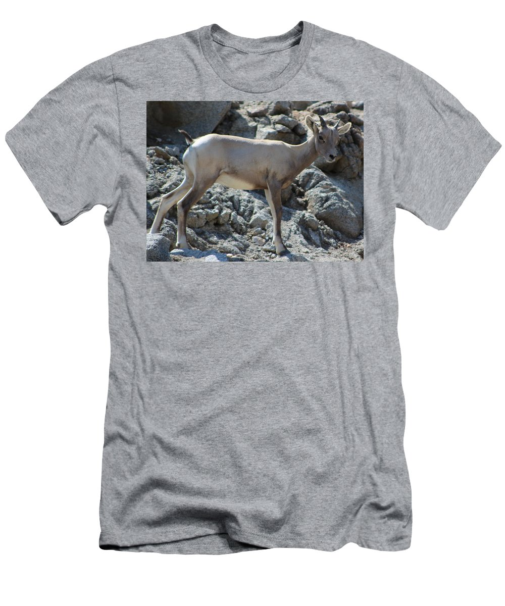 Bighorn Sheep Lamb Men's T-Shirt (Athletic Fit) featuring the photograph Bighorn Sheep Lamb by Colleen Cornelius