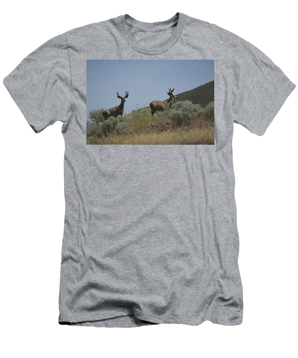 Buck Men's T-Shirt (Athletic Fit) featuring the photograph Blacktail Deer 3 by Sara Stevenson
