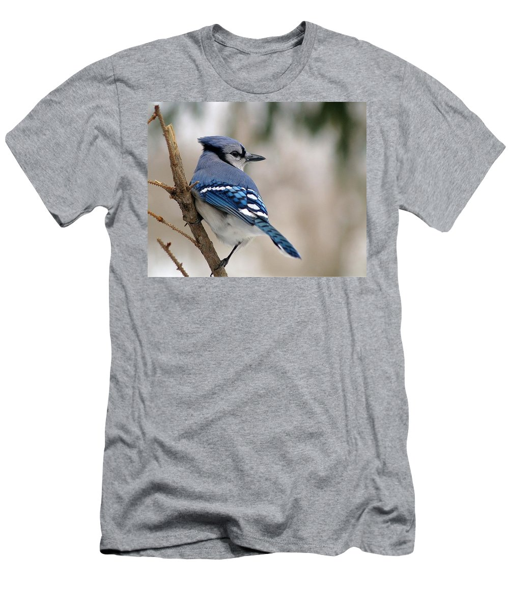 Blue Jay Men's T-Shirt (Athletic Fit) featuring the photograph Blue Jay by Gaby Swanson