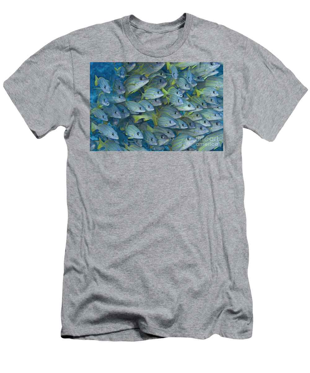 Animal Art Men's T-Shirt (Athletic Fit) featuring the photograph Bluestripe Snapper by Dave Fleetham - Printscapes