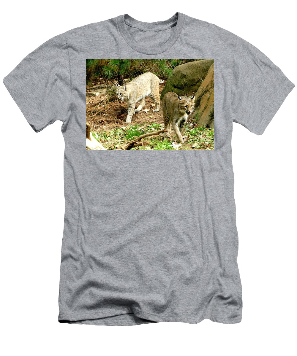 Wildlife Men's T-Shirt (Athletic Fit) featuring the photograph Bobcats Begin To Hunt by Larry Allan