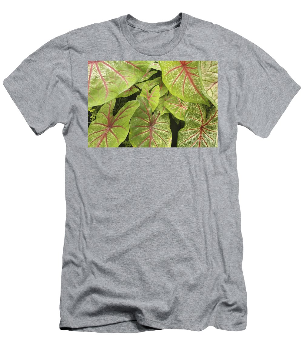 66-csm0195 Men's T-Shirt (Athletic Fit) featuring the photograph Caladium Leaves by Ron Dahlquist - Printscapes
