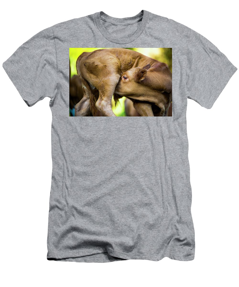 Calf Men's T-Shirt (Athletic Fit) featuring the photograph Calf by Shay Weiss