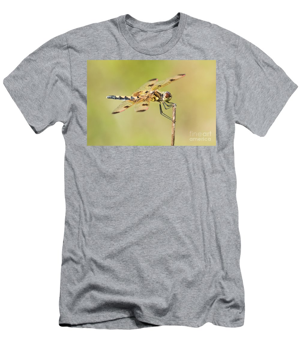 Animal Men's T-Shirt (Athletic Fit) featuring the photograph Calico Pennant by Abeselom Zerit
