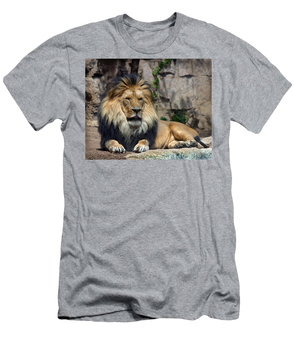 Lion Men's T-Shirt (Athletic Fit) featuring the photograph Captive Pride by Anthony Jones
