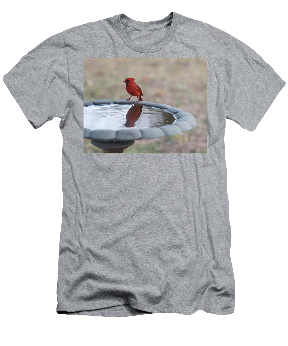 Terry Deluco Men's T-Shirt (Athletic Fit) featuring the photograph Cardinal Reflection by Terry DeLuco