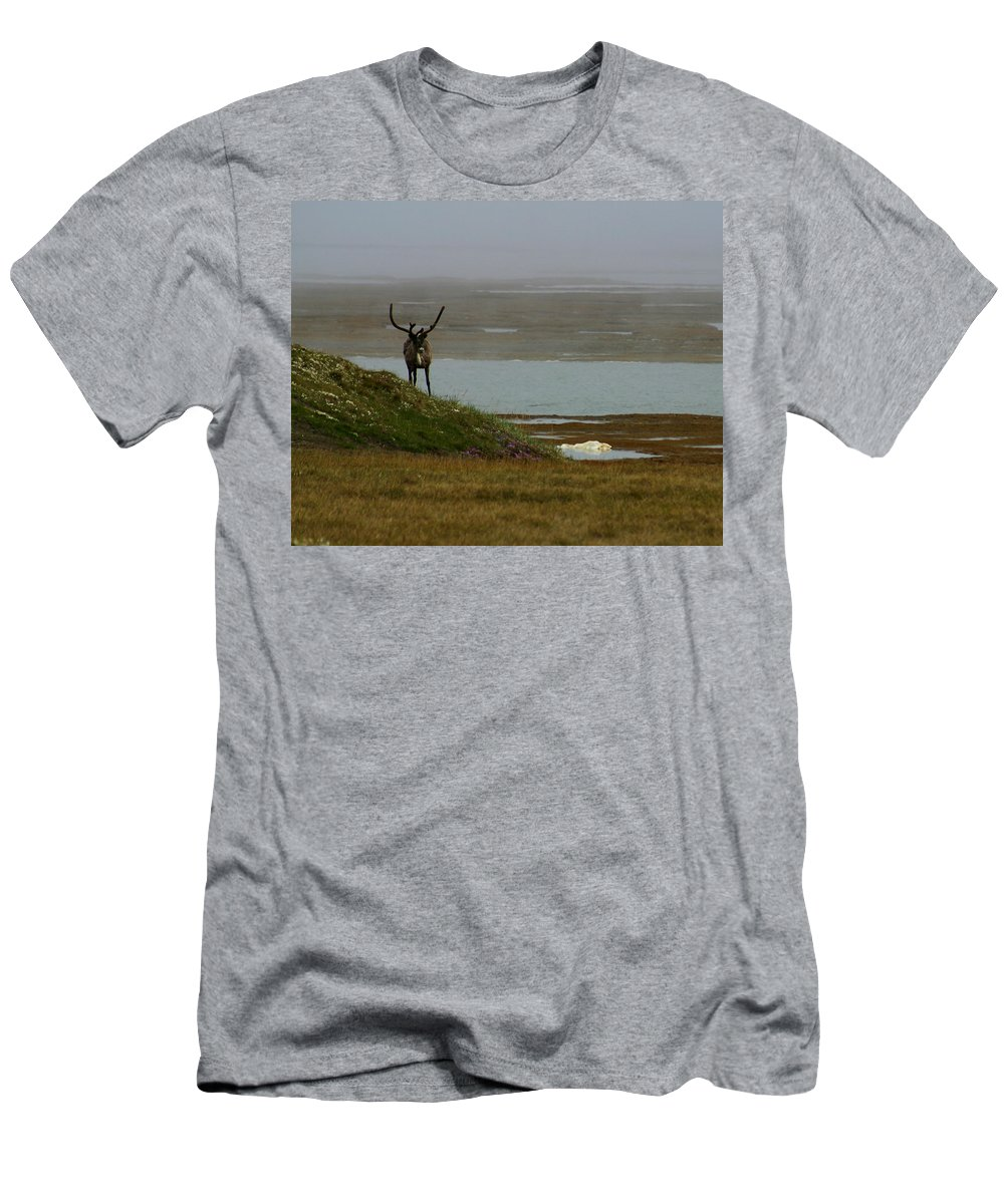Caribou Men's T-Shirt (Athletic Fit) featuring the photograph Caribou Fog by Anthony Jones