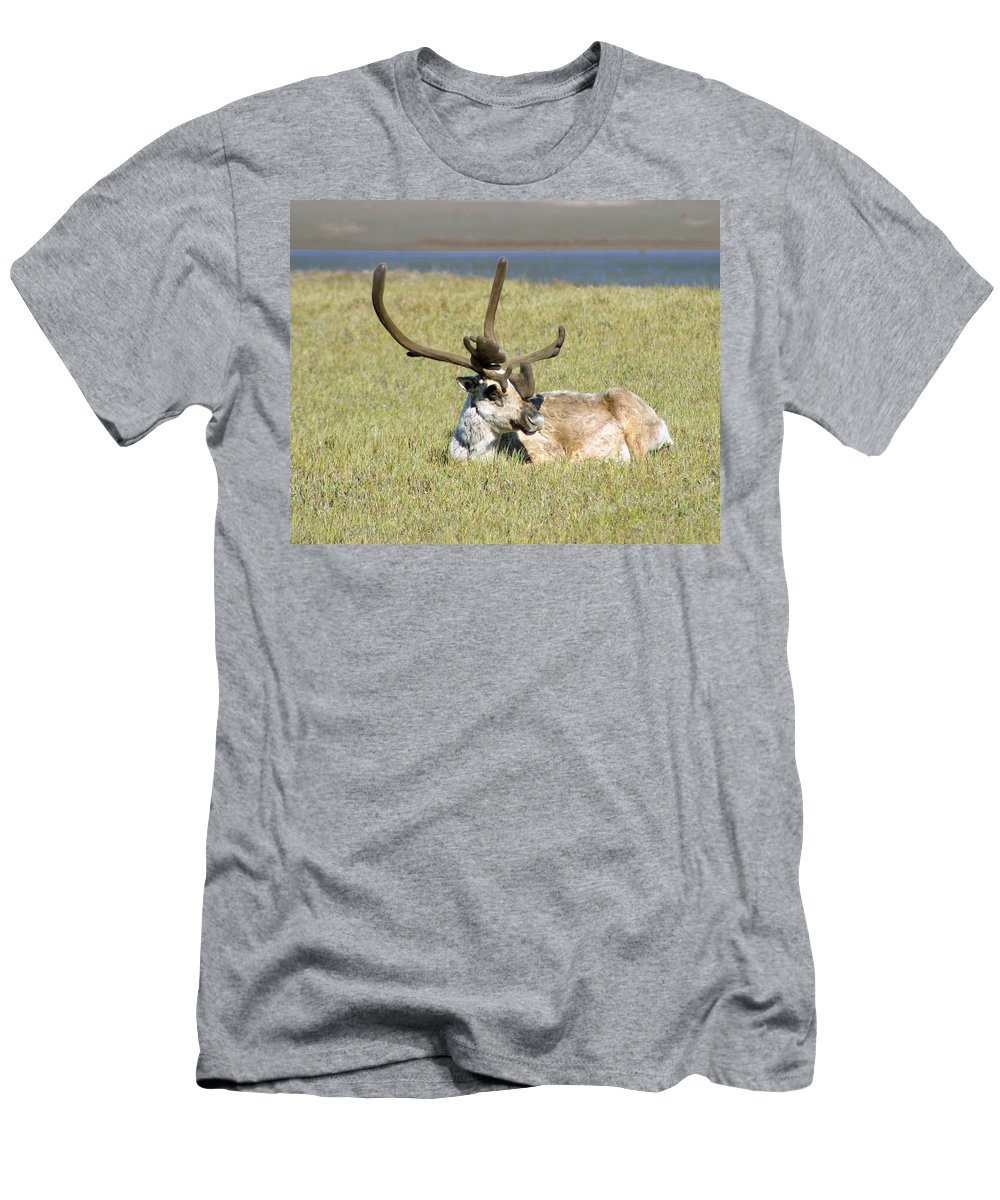 Caribou Men's T-Shirt (Athletic Fit) featuring the photograph Caribou Rest by Anthony Jones