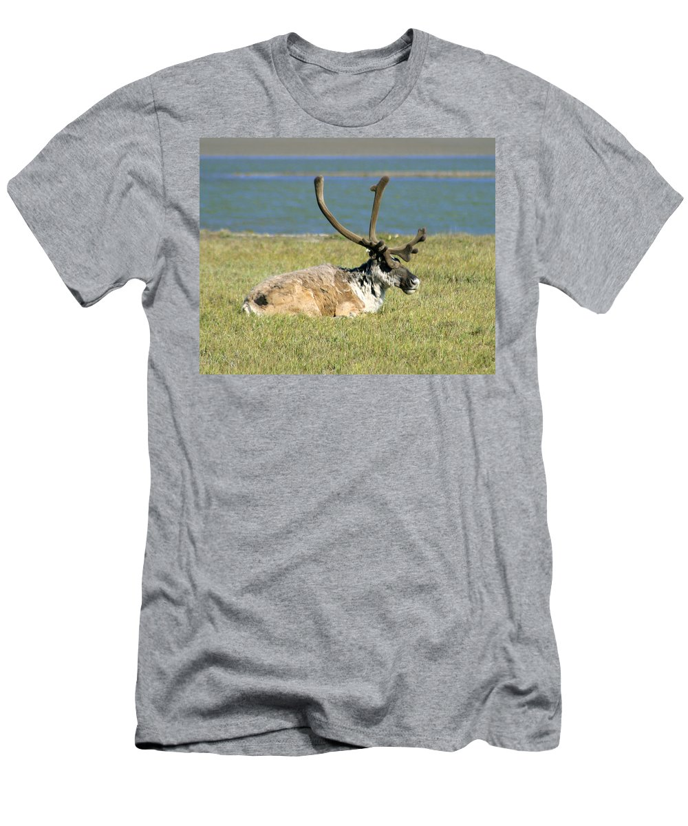 Caribou Men's T-Shirt (Athletic Fit) featuring the photograph Caribou Resting by Anthony Jones