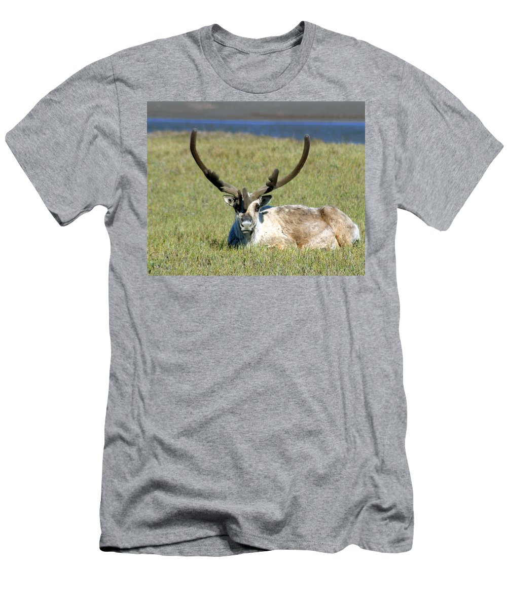 Caribou Men's T-Shirt (Athletic Fit) featuring the photograph Caribou Resting In Tundra Grass by Anthony Jones