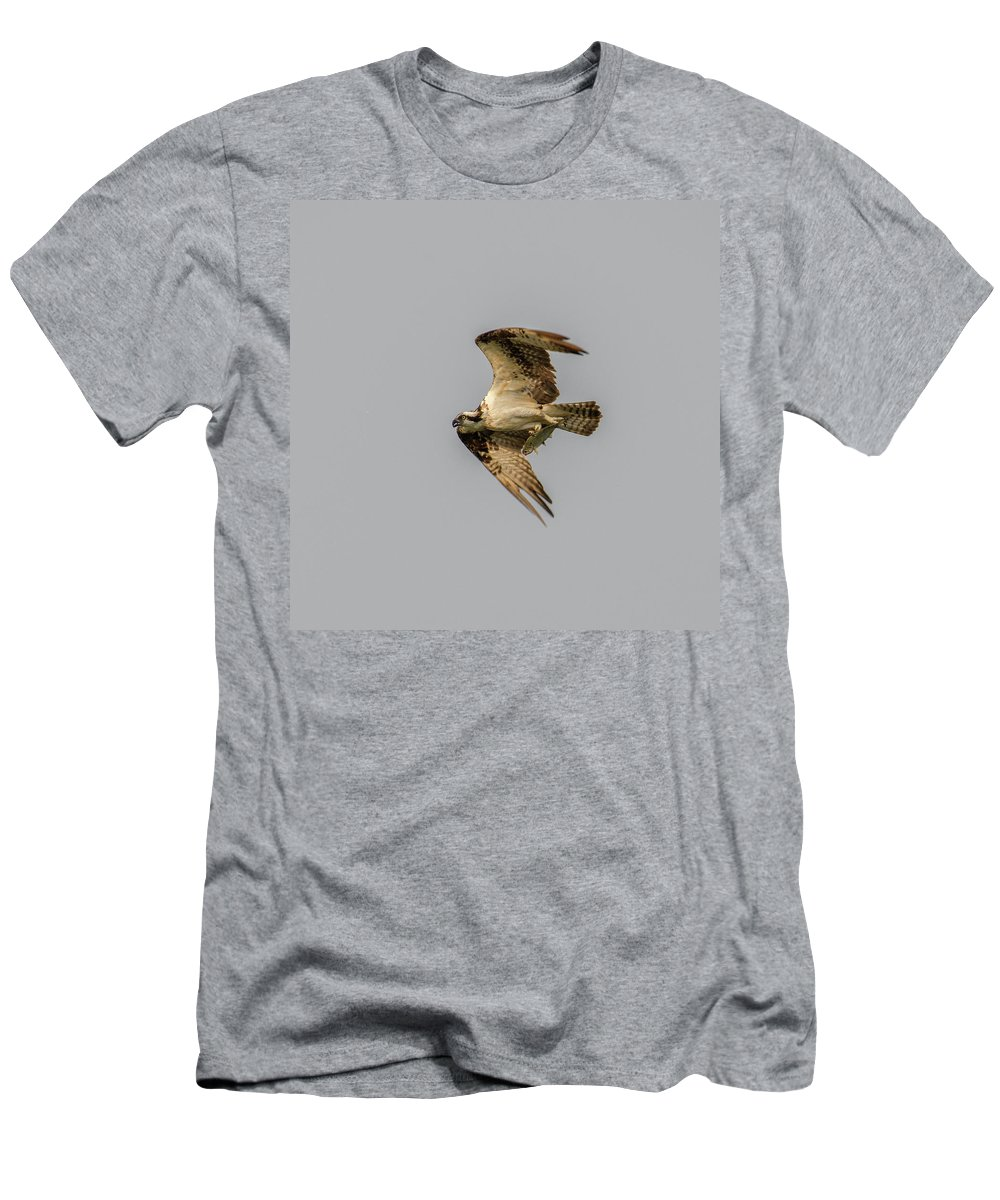 Osprey With Fish Men's T-Shirt (Athletic Fit) featuring the photograph Catch Of The Day by David Irwin