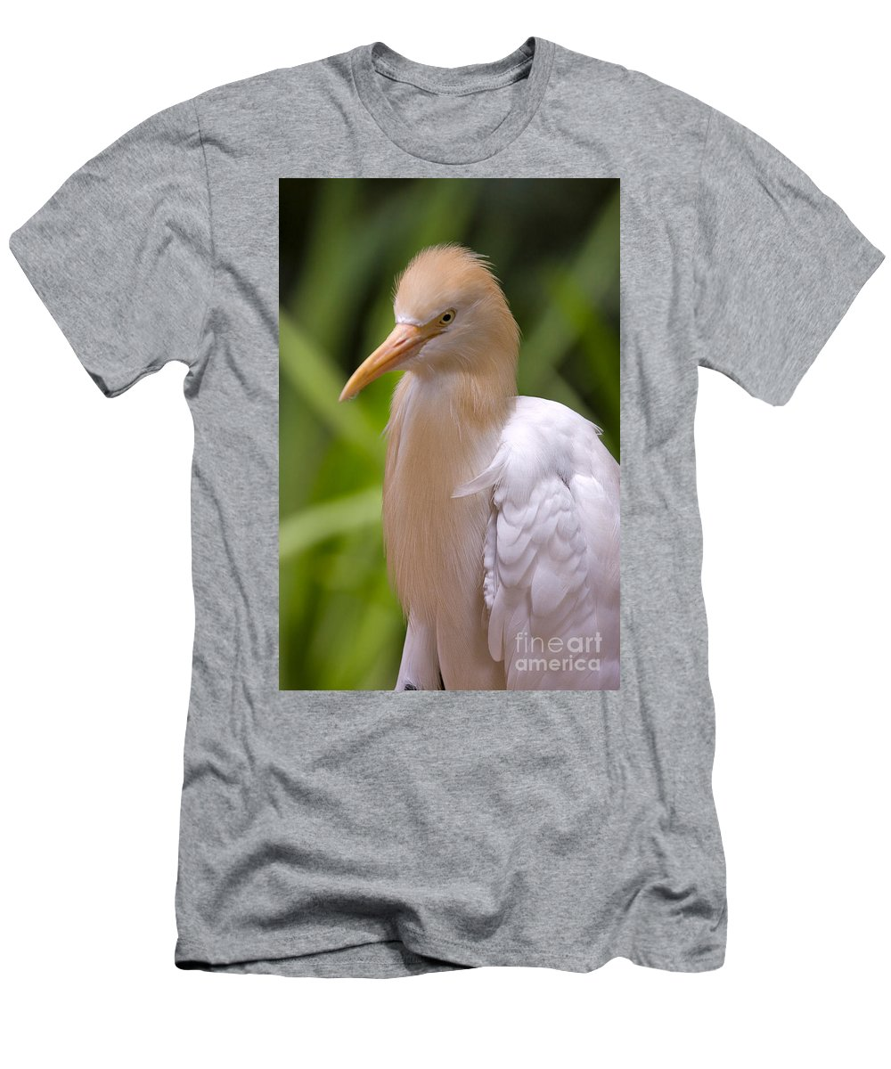 Bird Men's T-Shirt (Athletic Fit) featuring the photograph Cattle Egret by Louise Heusinkveld