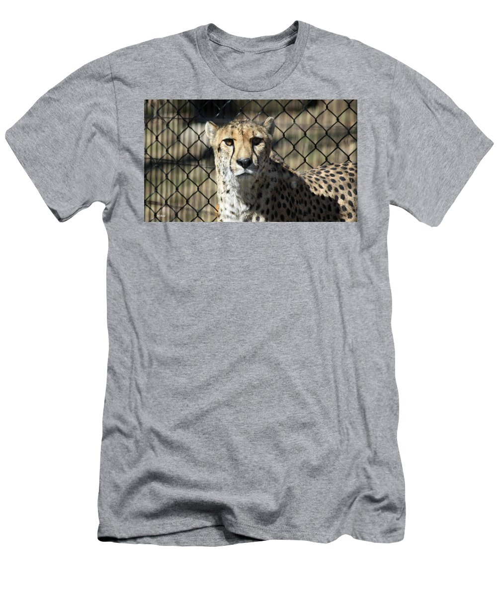 Maryland Men's T-Shirt (Athletic Fit) featuring the photograph Cheetah Alert by Ronald Reid