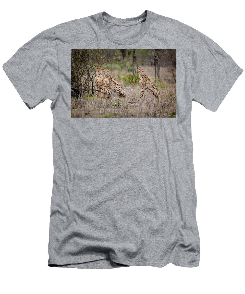 Cheetah Men's T-Shirt (Athletic Fit) featuring the photograph Cheetah Party I by Mari van Bosch