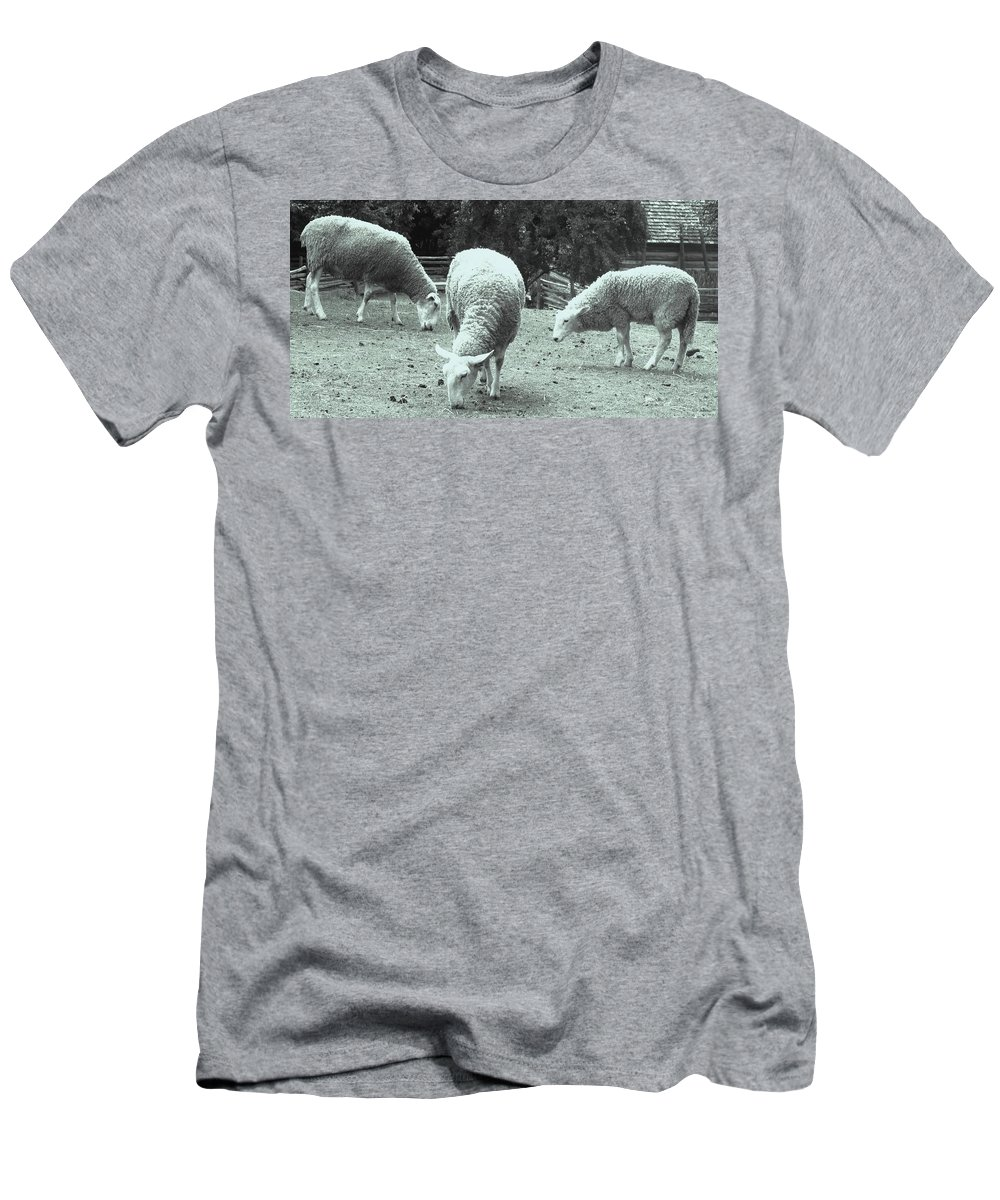 Sheep Men's T-Shirt (Athletic Fit) featuring the photograph Counting Sheep by Ian MacDonald