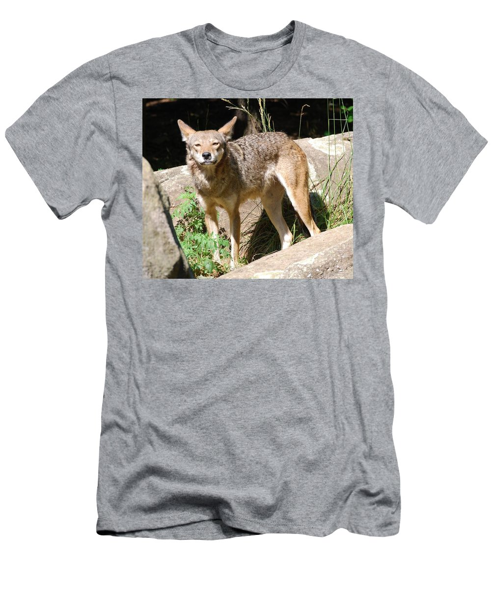 Coyote Men's T-Shirt (Athletic Fit) featuring the photograph Coyote Grin by Eric Liller