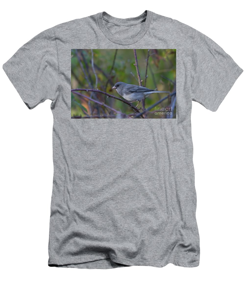 Arkansas Men's T-Shirt (Athletic Fit) featuring the photograph Dark-eyed Junco - 4077-2 by Jerry Owens